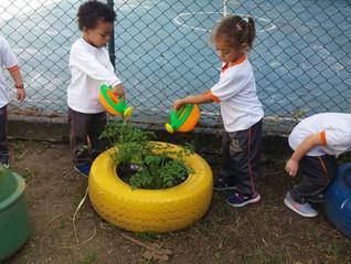 Momento de cultivar os alimentos - Hortinha