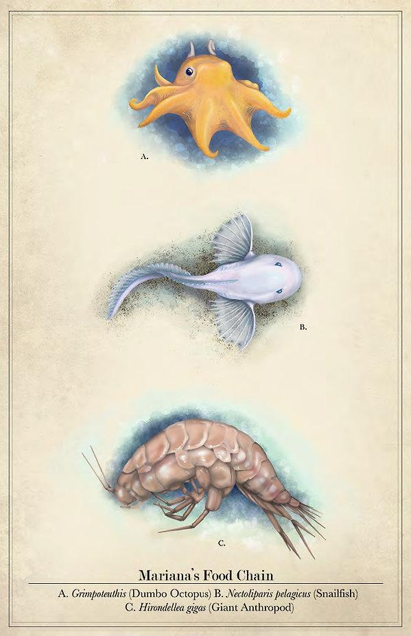 Graybeal-Illustrations-Portfolio-Submiss