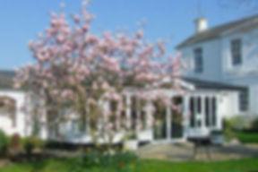 Magnolia Tree Wisma.jpg