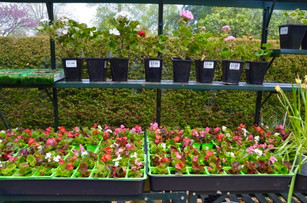 Greenhouse at Wisma