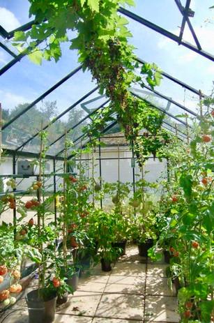 Wisma greenhouse