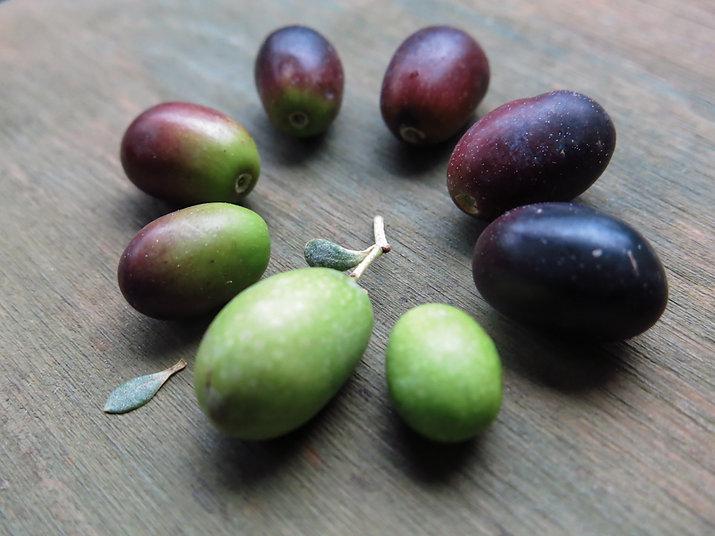 casaliva olives