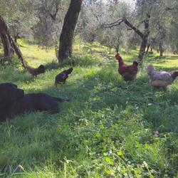 Francesco, laBeppe, laStraniera, ...