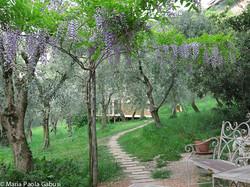 garden to the yurt
