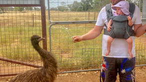 Emu Logic Farm Tour
