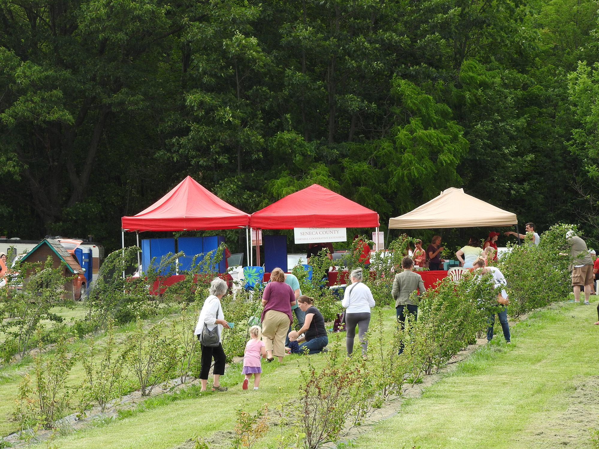Juneberry Festival