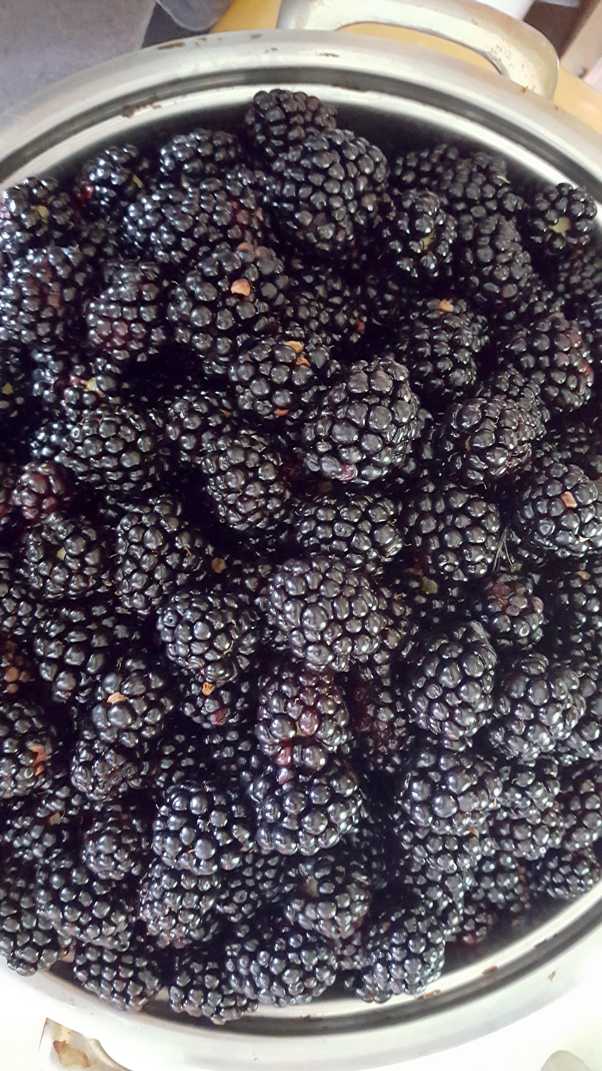 Fresh Blackberrys