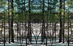 Forest for the Trees (2010-2011)