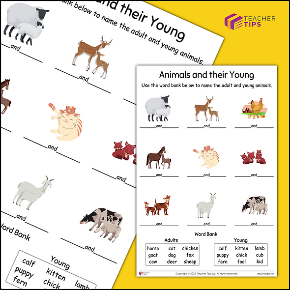 Animals and their Young - Worksheet #1