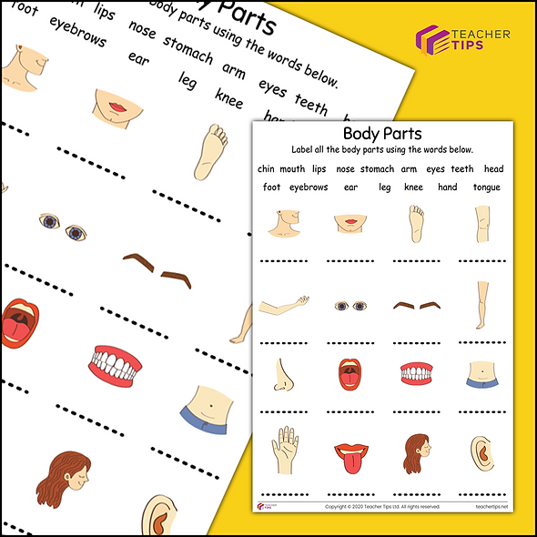 Body Parts - Worksheet #1