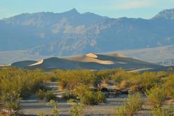 Mesquite Dunes at Dusk