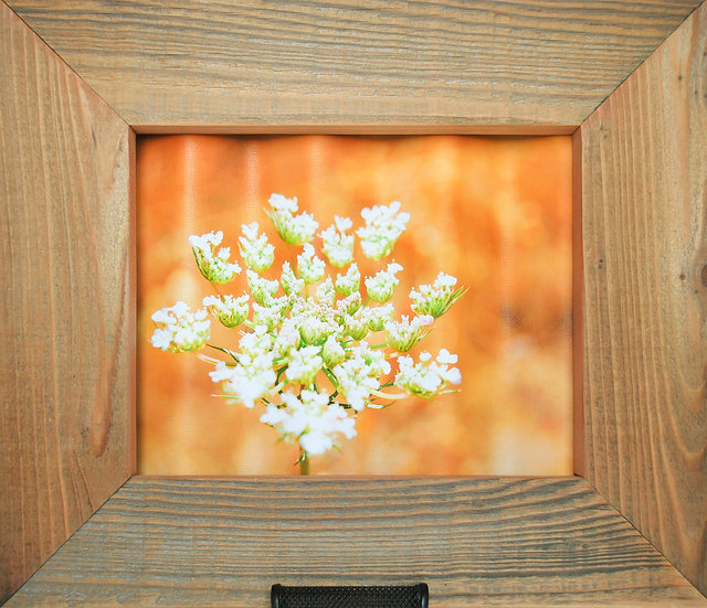 Rustic Nature Art Wild Carrot Front View