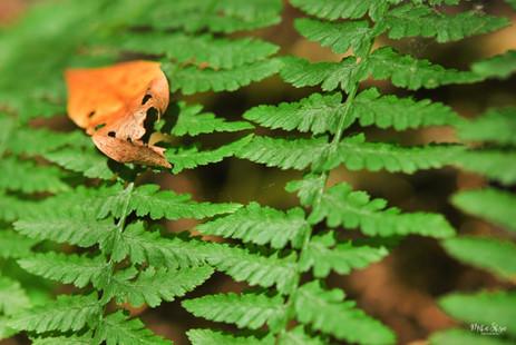 Little Ferns