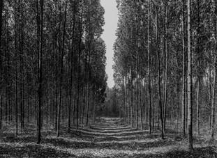 Caminho de Eucalipto PB