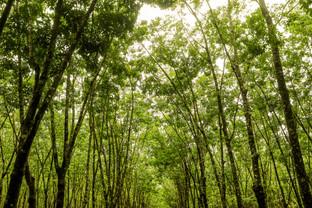 Caminho Verde III