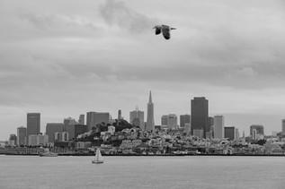 São Francisco City