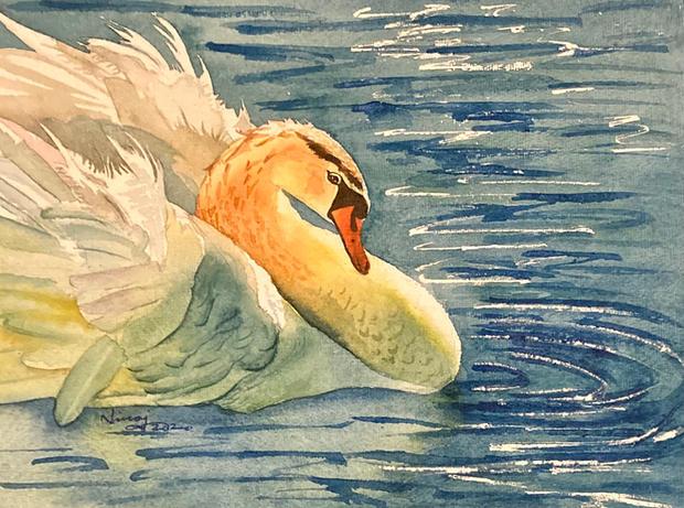 Swan's Grace