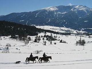Les sorties équestre en hiver se font grâce aux ferrures spéciales neige et glace.