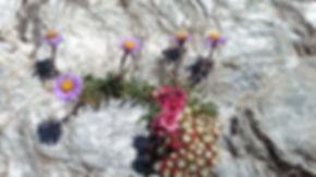 Découverte fleurs randonnée canigou