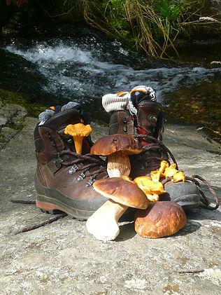 Randonnée à la semaine dans le Canigou avec cueillete de champignons