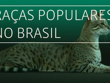 Gatos: Raças populares no Brasil