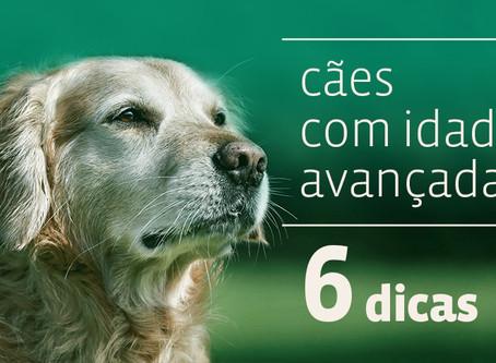 6 dicas para ajudar você a cuidar do seu cão de idade avançada.