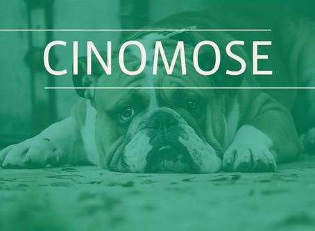 Cinomose: A doença viral que mais mata cães no mundo.