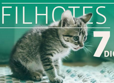 Sete dicas para cuidar do seu gato filhote