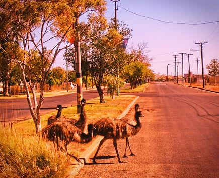 Emu Median.jpg