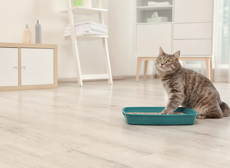 Want to Hide Your Litter Box? Create A Kitty Corner!