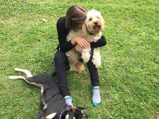 Utilisez le renforcement positif afin de créer une relation saine entre vous et votre compagnon cani