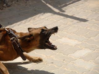 La réactivité canine et sa gestion