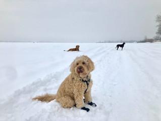 Nos 3 recommandations pour les BESTs promenades hivernales avec son chien