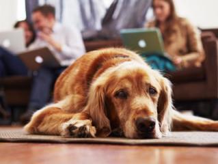Votre chien peut-il souffrir d'ennui?