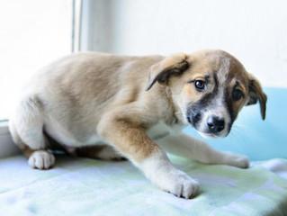 Mon chien me parle, mon chien  communique : le langage corporel canin & les signaux d'apaise