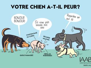 De quelle façon les chiens communiquent leurs émotions entre eux et avec les humains ?
