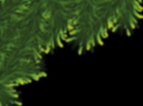 fir_tree_PNG3725.png