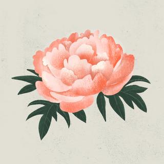 FAVORITE FLOWER - PEONY