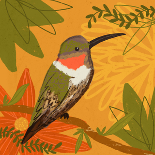 DAY 46 - HUMMINGBIRD
