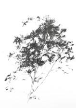 IMG_5430color baja color baja .jpg