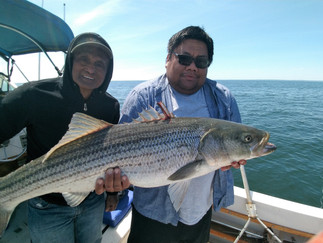 Another super day  Load of Porgies 4 Stripers 18-30lbs