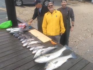 Limits of Blackfish to 6lbs and Striper limit to 18lbs