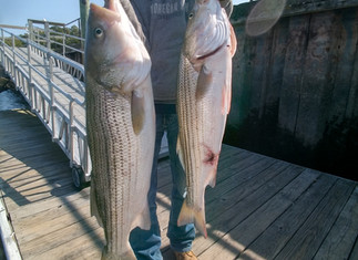 Fall Fishing Begins 3 Keeper Stripers to 34.5in,20 Blues to 7lbs