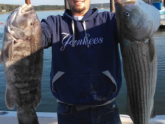What a day 9 Keeper Blacks to 7.5 lbs, 3 Keeper Stripers to 16lbs ,20 Bluefish to 4 lbs