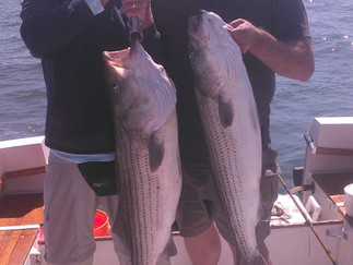 Nice Stripers 22 lbs and 26 lbs today