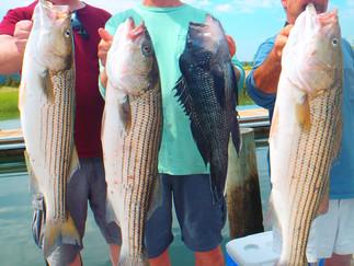 5 keeper Bass for last 2 trips 15 Shorts,14 Keeper Sea Bass