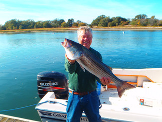 FIRST FALL KEEPER STRIPER,BIG SEABASS MIXIN WITH CATCHES