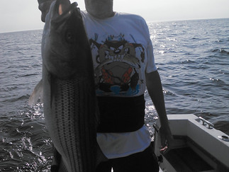 Boat Limit of Stripers again 2 fish over 20lb mark