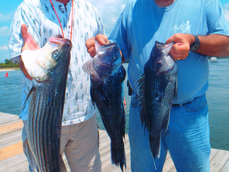 Big SeaBass,Porgies today,Keeper Bass