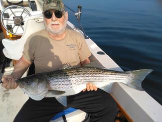 6 Stripers on Chunks to 20lbs,6 Keeper SeaBass ,Load of Porgies